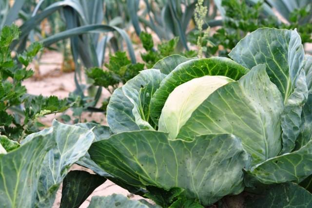 ЭМ-технология для богатого и полезного урожая