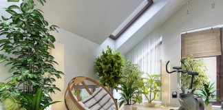 Крупные растения в интерьере