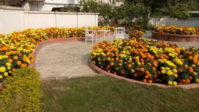 Цветники из бархатцев