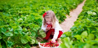 Благодаря природному происхождению биопрепараты безопасны для человека