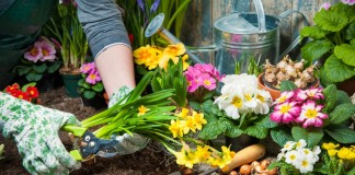 Лунный календарь на май поможет все успеть и в саду, и в огороде