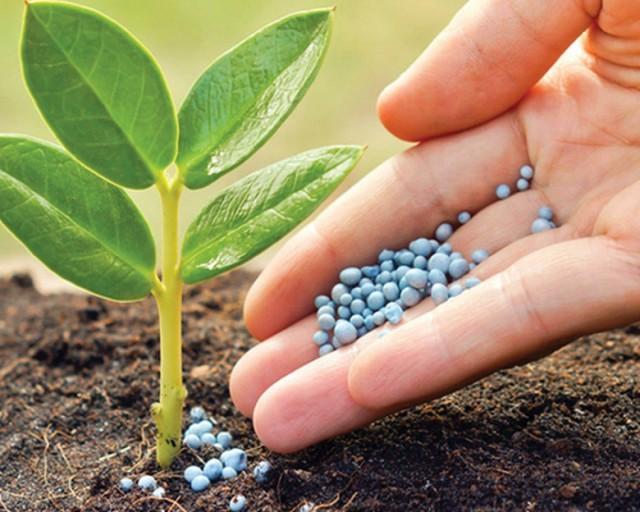 Нитрофоска — минеральное удобрение для растений