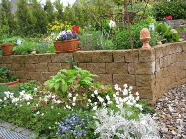 В мае наступает время переселения горшечных культур в сад