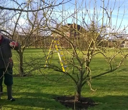 Весенний ухода за яблонями
