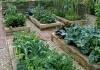 «Циркон» можно применять на любой стадии развития растений