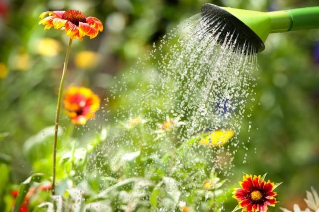Поливы – один из базовых элементов ухода за садовыми растениями