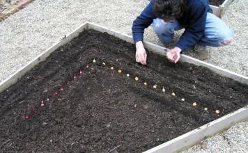 В июне еще можно и нужно сеять и сажать многие растения