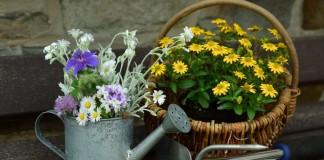 Июнь - активный месяц для работы с цветами