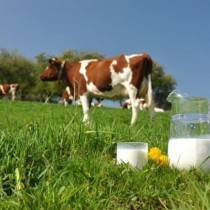 Натуральное молоко