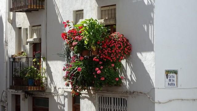 Растения вертикального балконного сада должны дополнять и подчеркивать красоту друг друга
