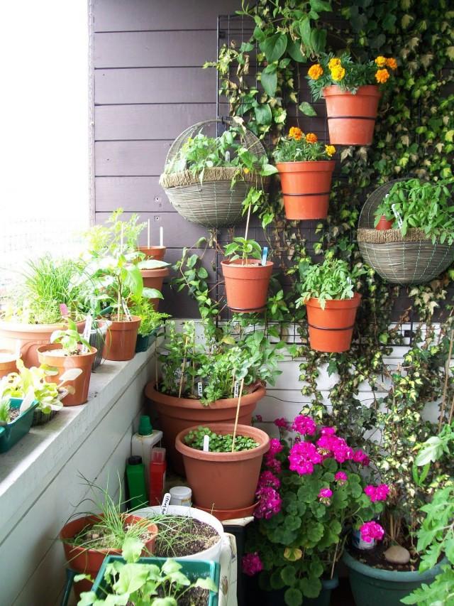 Плющ, как лиану, идеально использовать на тенистых балконах