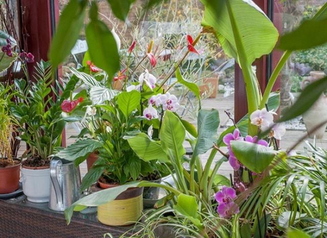 К капризным растениям часто относят все экзотические или тропические культуры. Но это не так