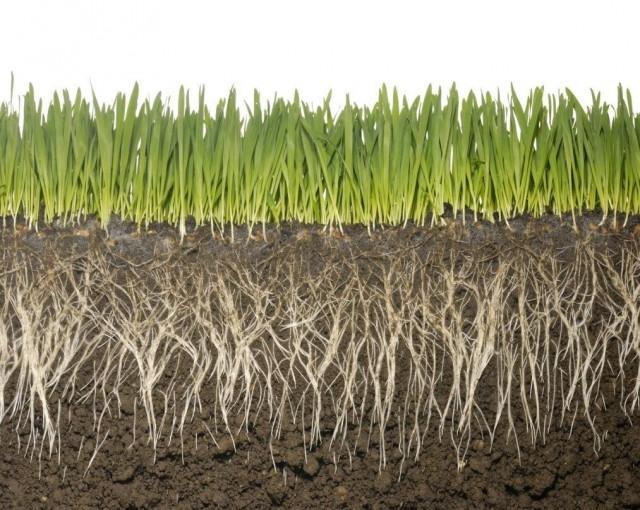 Гуминовые удобрения стимулируют ростовую активность растений