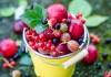 БИОпрепараты - природная защита Вашего сада и огорода!