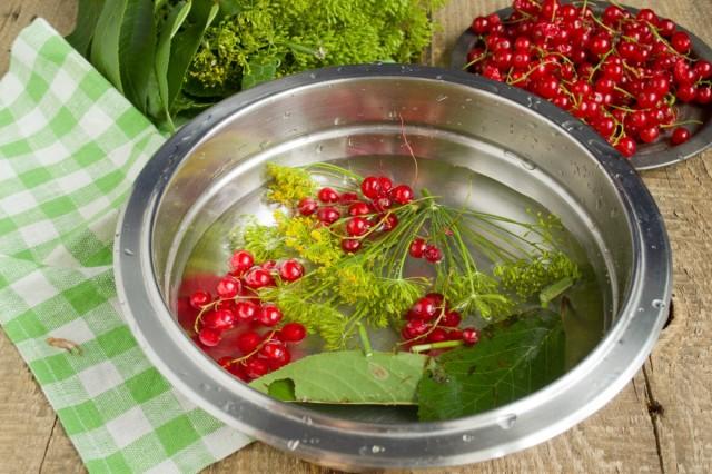Тщательно промываем и обдаем кипятком смородину, укроп и листья вишни