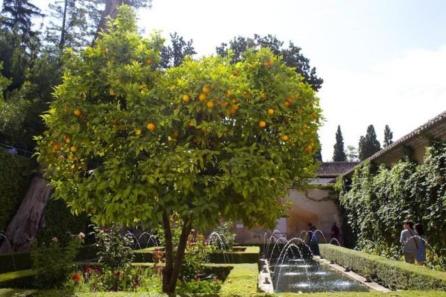 Плодовые деревья в мусульманских садах доминируют, в сравнении с декоративными