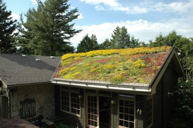Цветники из многолетников на крыше — особенности организации