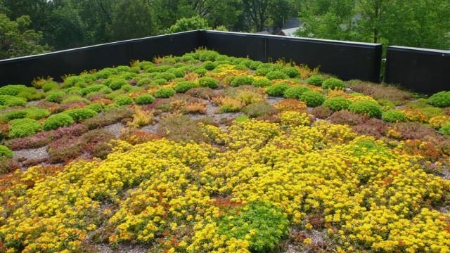 Для озеленения крыш используют особенные растения - очень выносливые