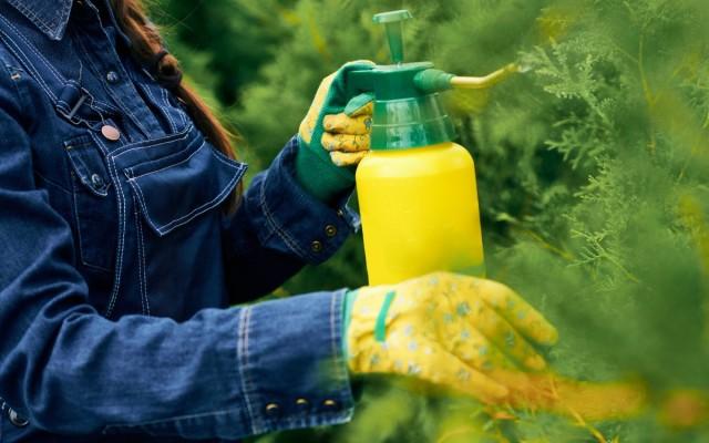 Нитроаммофоской можно удобрять не только огородные, но и садовые культуры