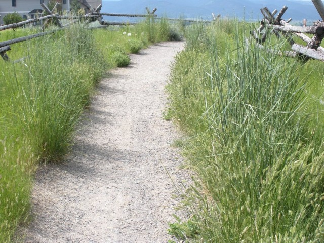 Житняки не выносят даже слабокислую почву