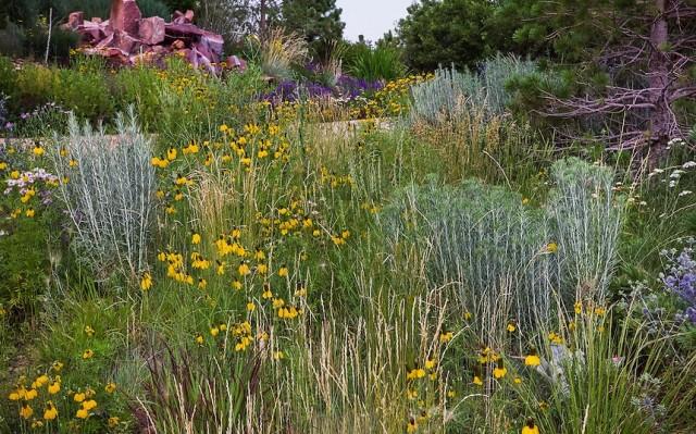Партнеров для житняка можно подбирать из числа любых растений, предпочитающих сходные условия выращивания