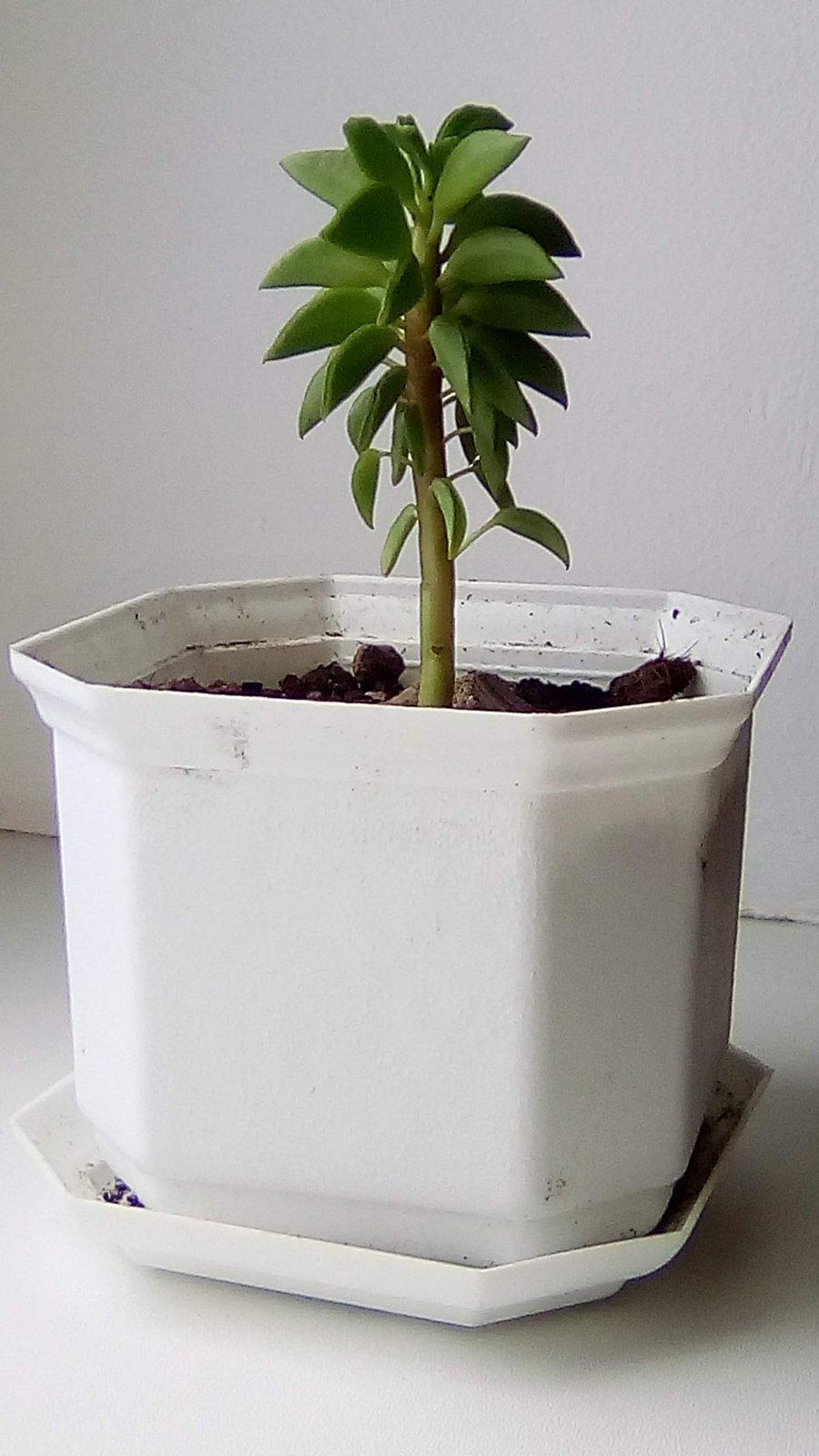 Неопознанное растение