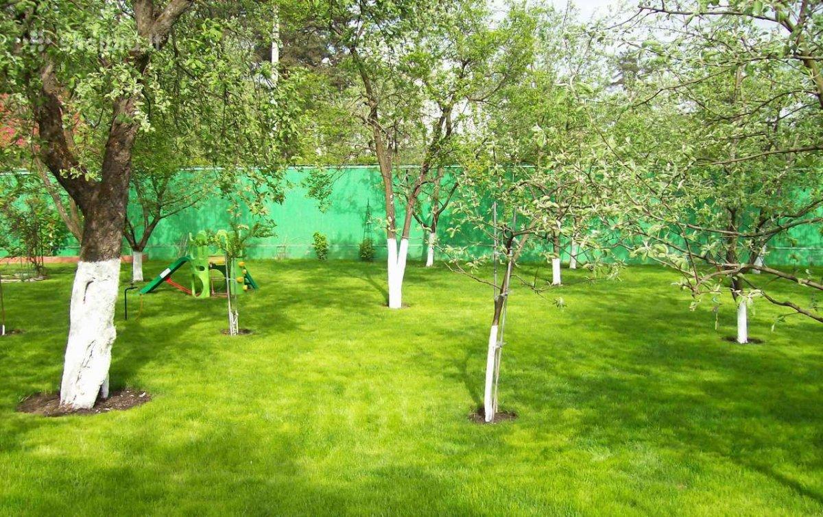 Когда в саду сажать деревья 46
