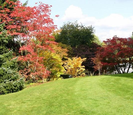 Лучшие листопадные декоративные деревья