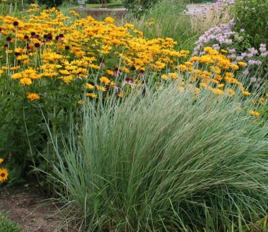 «Дождевые» цветники — организация и выбор растений