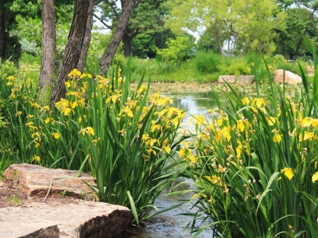 Барьеры или фильтры из одного типа растений часто используют возле водоемов для защиты нижних уровней от затопления