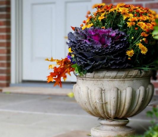 Каменные цветочницы — выбор растений, уход, роль в дизайне сада