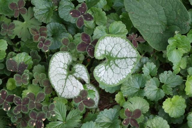 Чтобы цвет присутствовал в озеленении постоянно, нужно внимательно выбирать растения со ставкой на декоративные листья