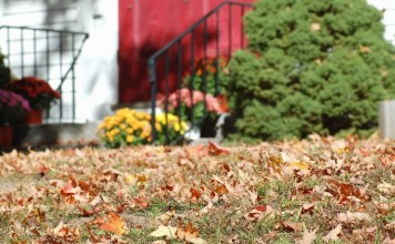 15 серьёзных ошибок, которые нельзя допустить осенью в саду
