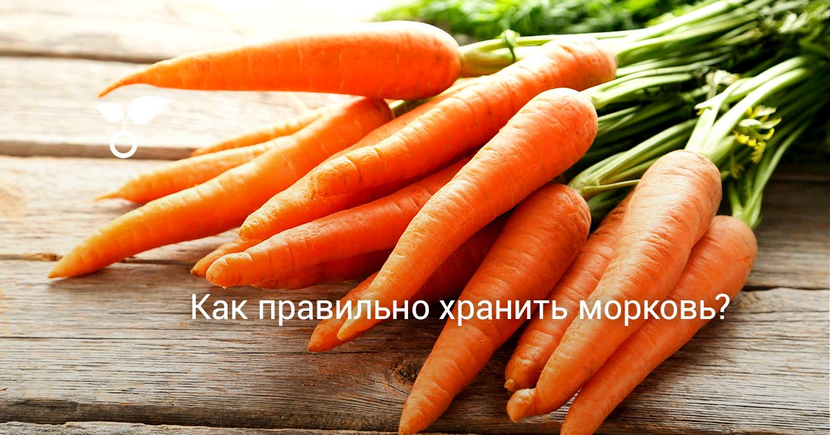 Как правильно хранить морковь в песке