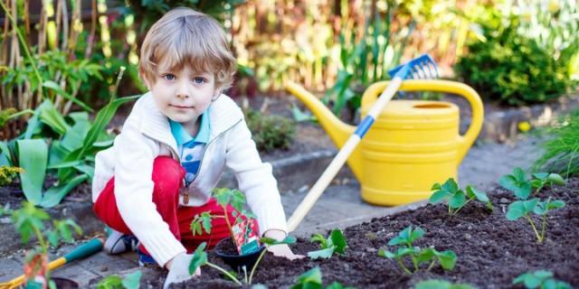 Лучшее решение для детской клумбы - растения, которые имеют вкусные плоды