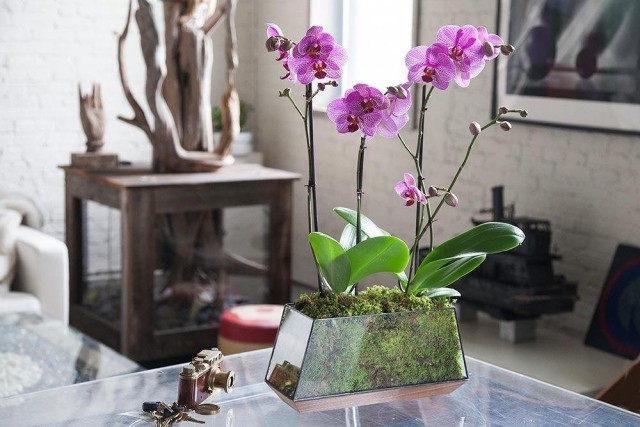 В горшках выращивают каланту, тунию, плейоне, фаюс, блетиллу, и все виды орхидей, не любящих полного высыхания почвы