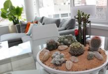 Сад камней в интерьере — особенности создания и выбор растений