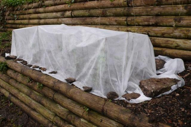 Укрыть растения раньше необходимого так же вредно, как и позже