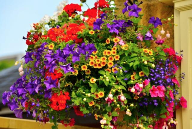 Если вы высаживаете растения в контейнер, то можно смело сокращать дистанцию между ними вдвое, а то и втрое от рекомендованной производителем