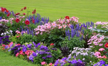20+ цветов, которые можно посеять под зиму