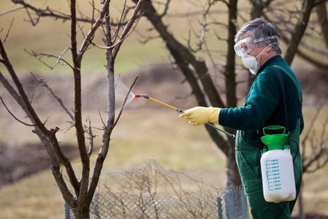Сегодня существует множество препаратов для обработки сада от вредителей и болезней