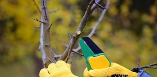 Какие плодовые растения нужно обрезать осенью?