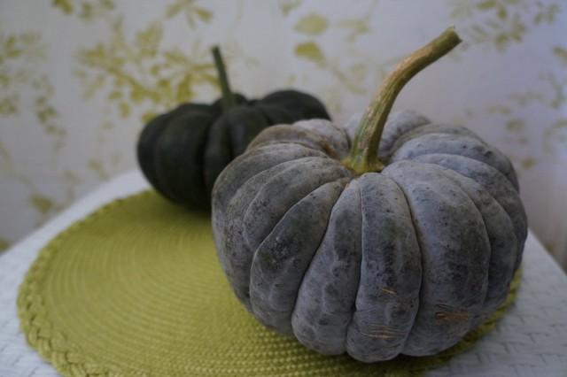 Сорт тыквы «Чиримен» (Сhirimen)