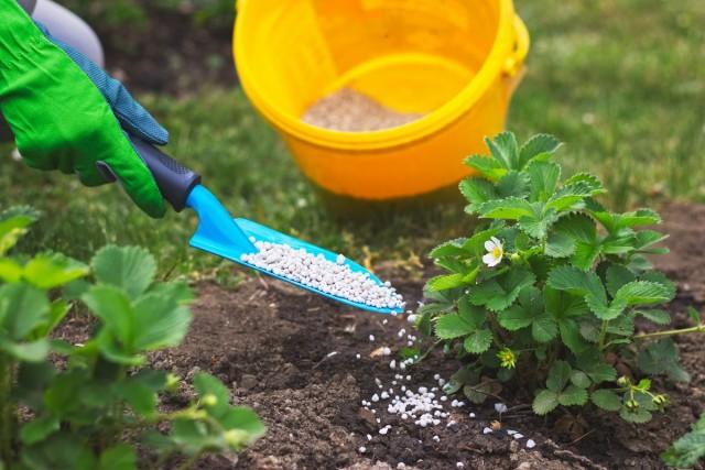 Если на дачном участке почвы дерново-подзолистые кислые или красноземные, то лучше вносить азотно-фосфорные туки локально