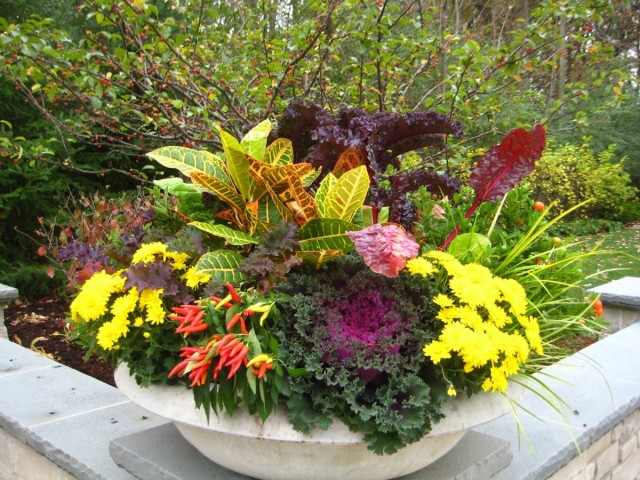 Список растений, которые могут стать частью цветочной осенней композиции в контейнере, внушительный