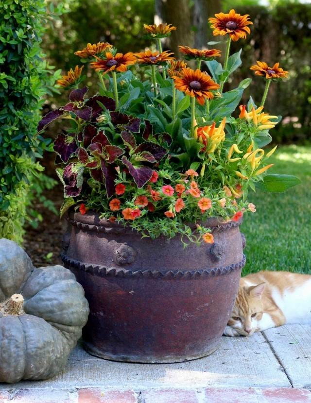 Осенние звезды контейнерного сада – это культуры со ставкой на яркие осенние краски