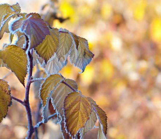 Осенний уход за ягодными кустарниками