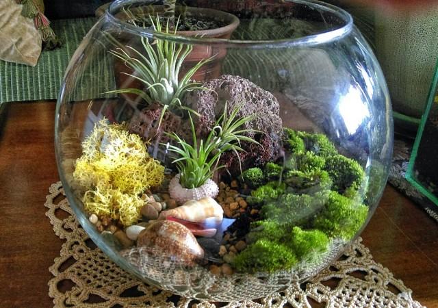 Миниатюрные растения можно на зиму поместить во флорариумы