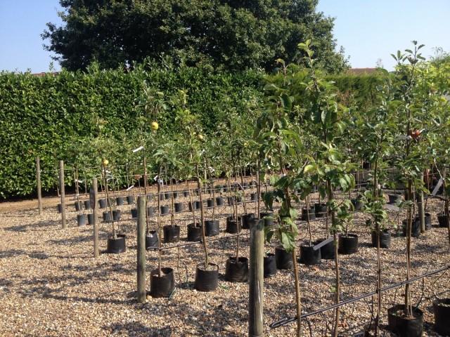 Залогом хорошего урожая будет покупка районированного сорта