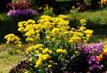 Как правильно посеять цветы на зиму?